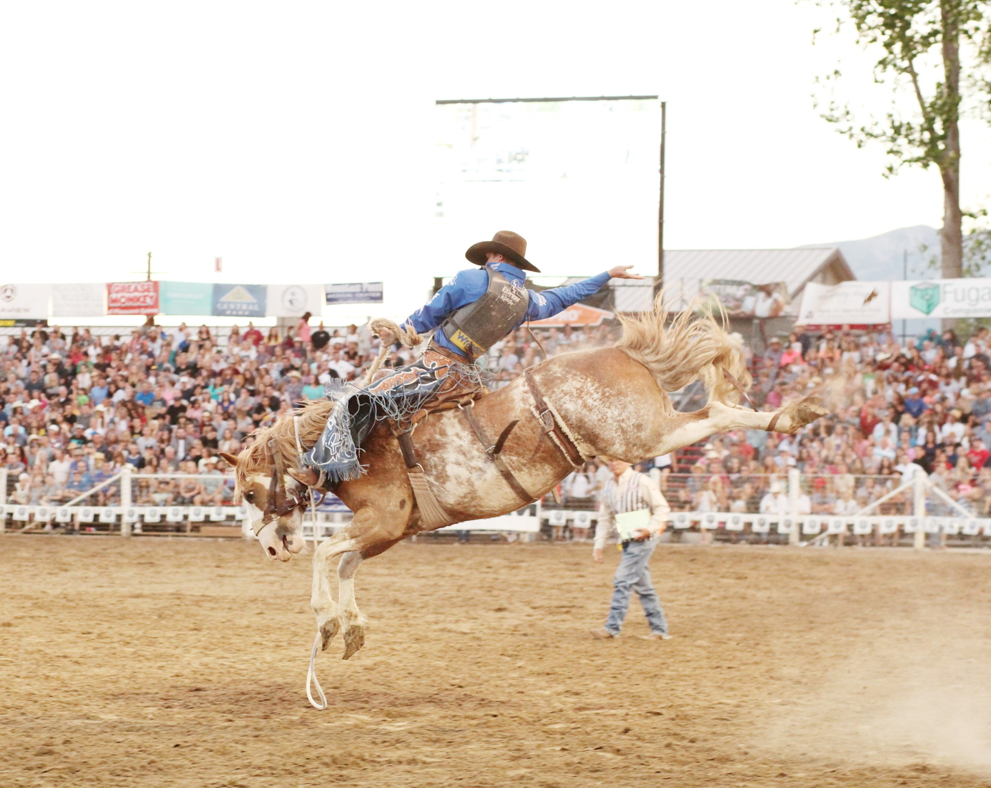man on horse during rodeo